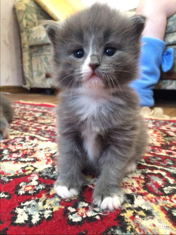 Взять котенка в добрые руки на авито нижневартовск
