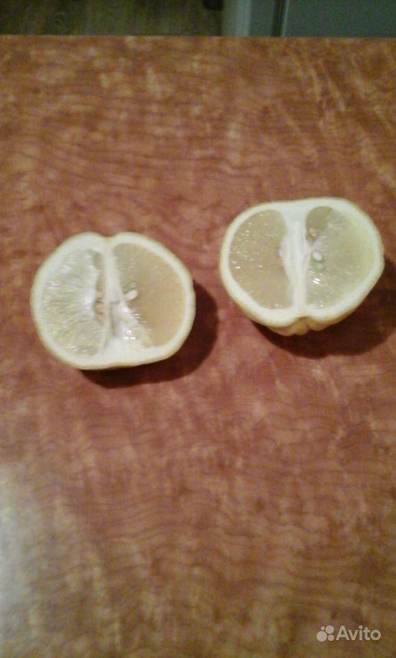 Комнатные лимоны Пандероза купить на Зозу.ру - фотография № 5