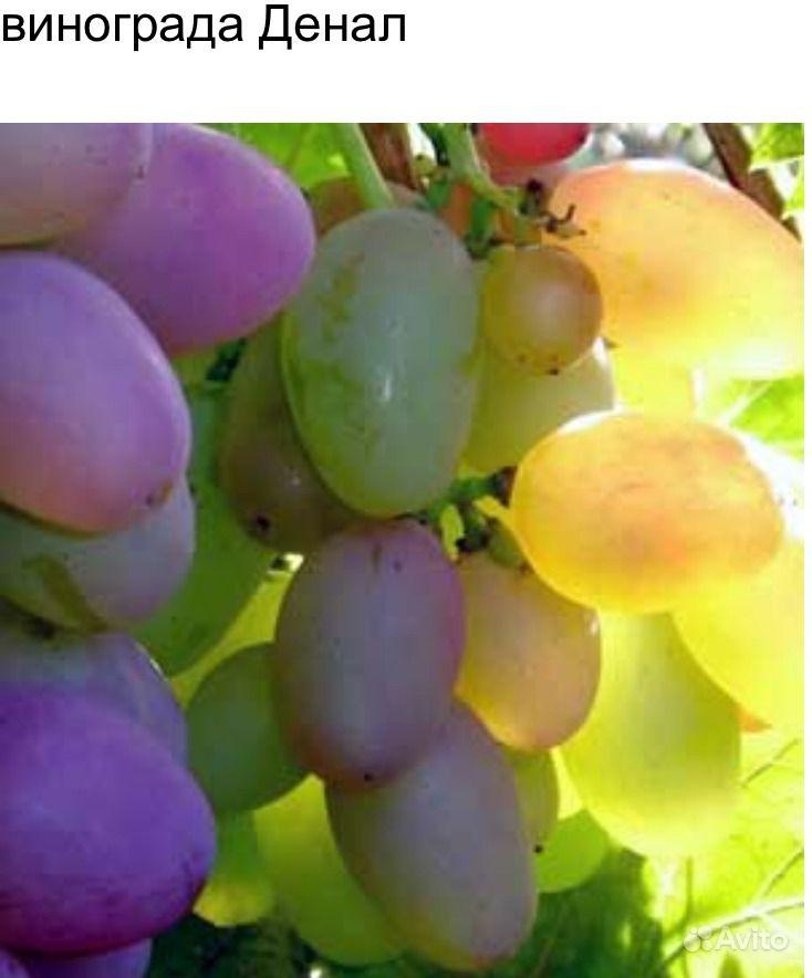Саженцы винограда лучших сортов купить на Зозу.ру - фотография № 1