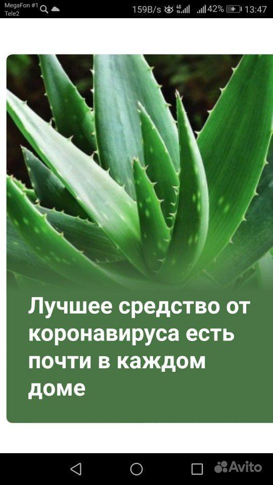 Алоэ Вера купить на Зозу.ру - фотография № 3