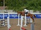 Турнирная лошадь для побед