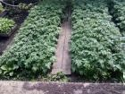 Рассада томатов.огурцов.перца.цветов.арбуз.баклажа
