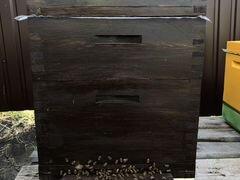 Продам пчелосемьи Buckfast