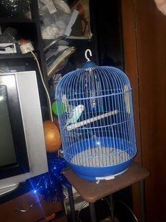 Продам волнистого попугая объявление продам