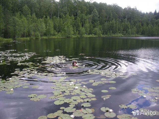 рыбалка на озерах в петушинском районе