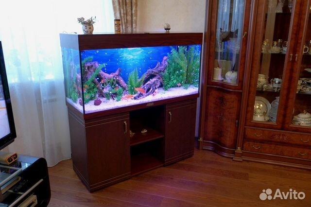 Все для аквариума в челябинске