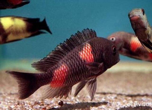 Аквариум и аквариумные рыбки фото и названия