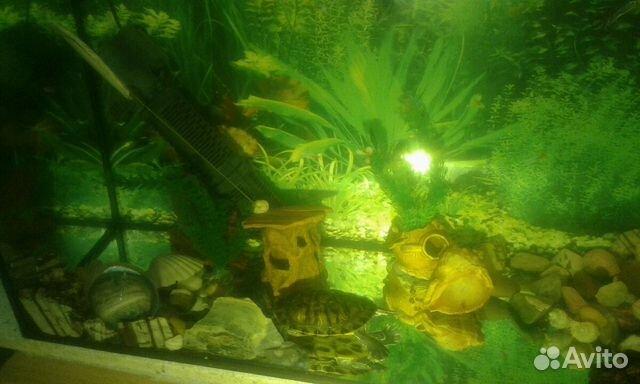 Красноухие черепахи красноярск