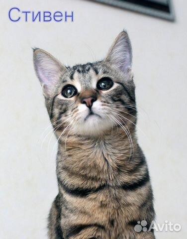 89137249811 Стивен и Холли котята-подростки