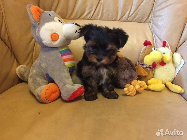 Милые щеночки купить на Зозу.ру - фотография № 4