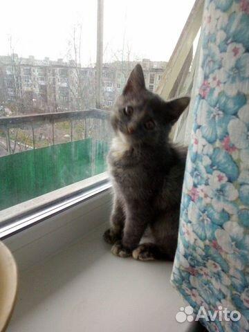 Найден котёнок