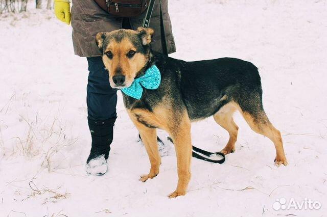 Взрослый пёс из приюта в дар купить на Зозу.ру - фотография № 5