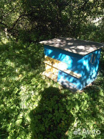 89082811313 Пчелы с домиками