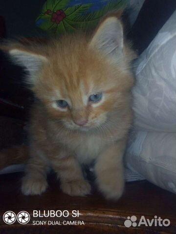Кошка  89293253492 купить 4