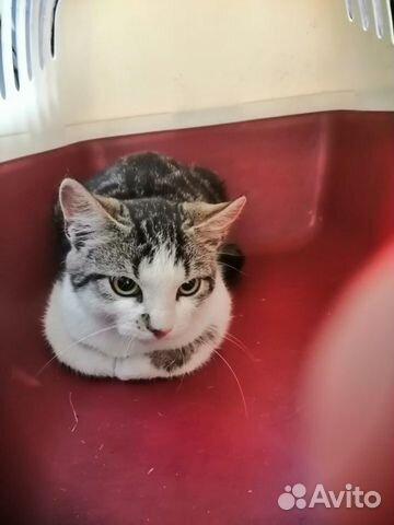 Очень ласковый котенок Гоша 5 мес ищет свой дом