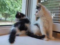 Очаровательные котята в хорошие руки