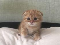 Рыжие котята. Красный мрамор