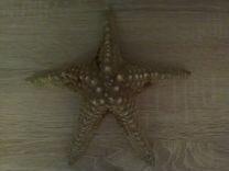 Морская звезда 22 см