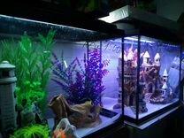 Аквариумы,крышки,тумбы,оборудование,рыбки,растения