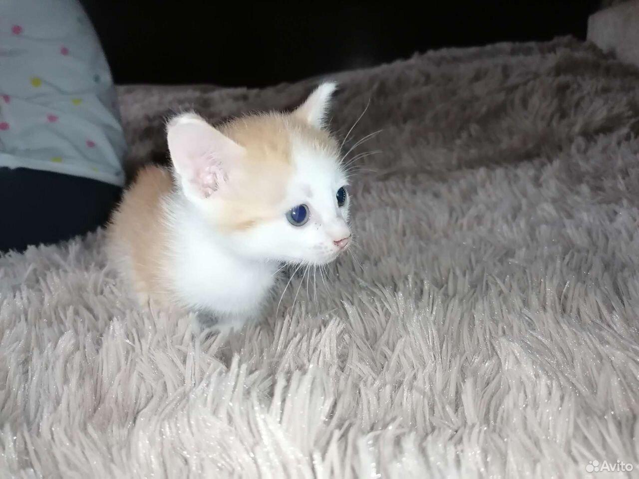 Кошка  89069679228 купить 1