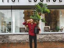 Кальянная Fiji Lounge