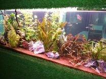 Чистка аквариума. Рыба, декорации