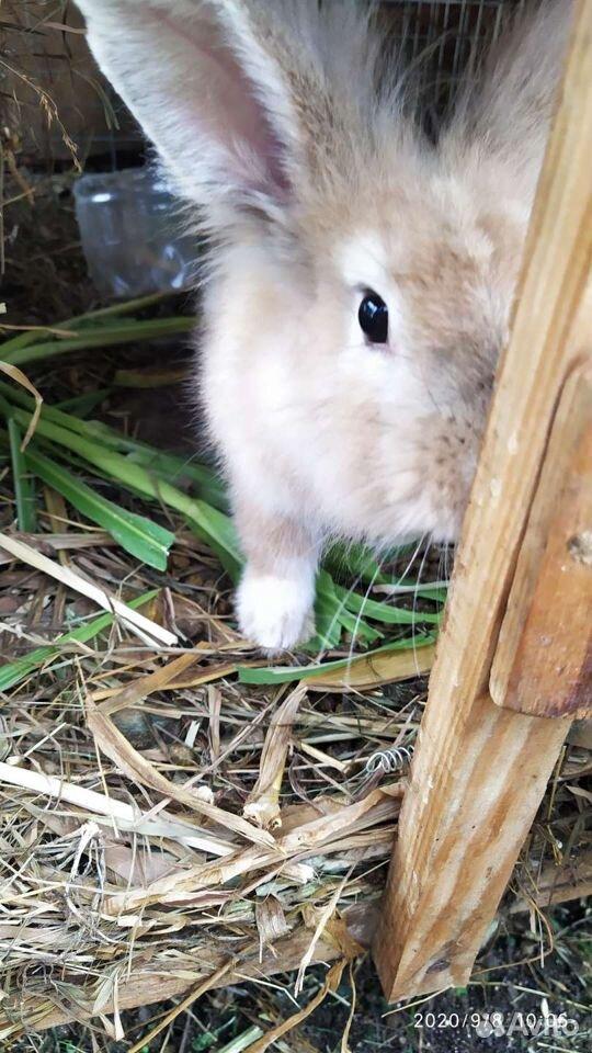 Кролики разных пород  89887675229 купить 10